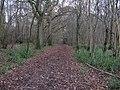 Bishop's Wood near Five Oaks - geograph.org.uk - 1594257.jpg