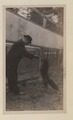 Black foxes owned by Spring Park Black Fox Company, Limited Photo B (HS85-10-26275) original.tif