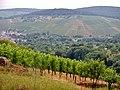 Blick über die Weinberge - panoramio.jpg