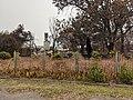 Blue Mountains Property Destroyed by Bushfire JAN2020.jpg