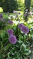 Bodnant Gardens (28077311333).jpg