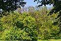 Boholiuby Lutskyi Volynska-Pershotravnevyi park-view from east-1.jpg