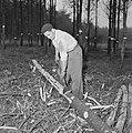 Bosbewerking, arbeiders, boomstammen, gereedschappen, Bestanddeelnr 251-9127.jpg