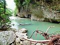 Bosco di Frasassi AN fiume e rami.JPG
