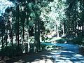 Bosque en el camino.JPG