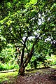Botanic garden limbe4.jpg