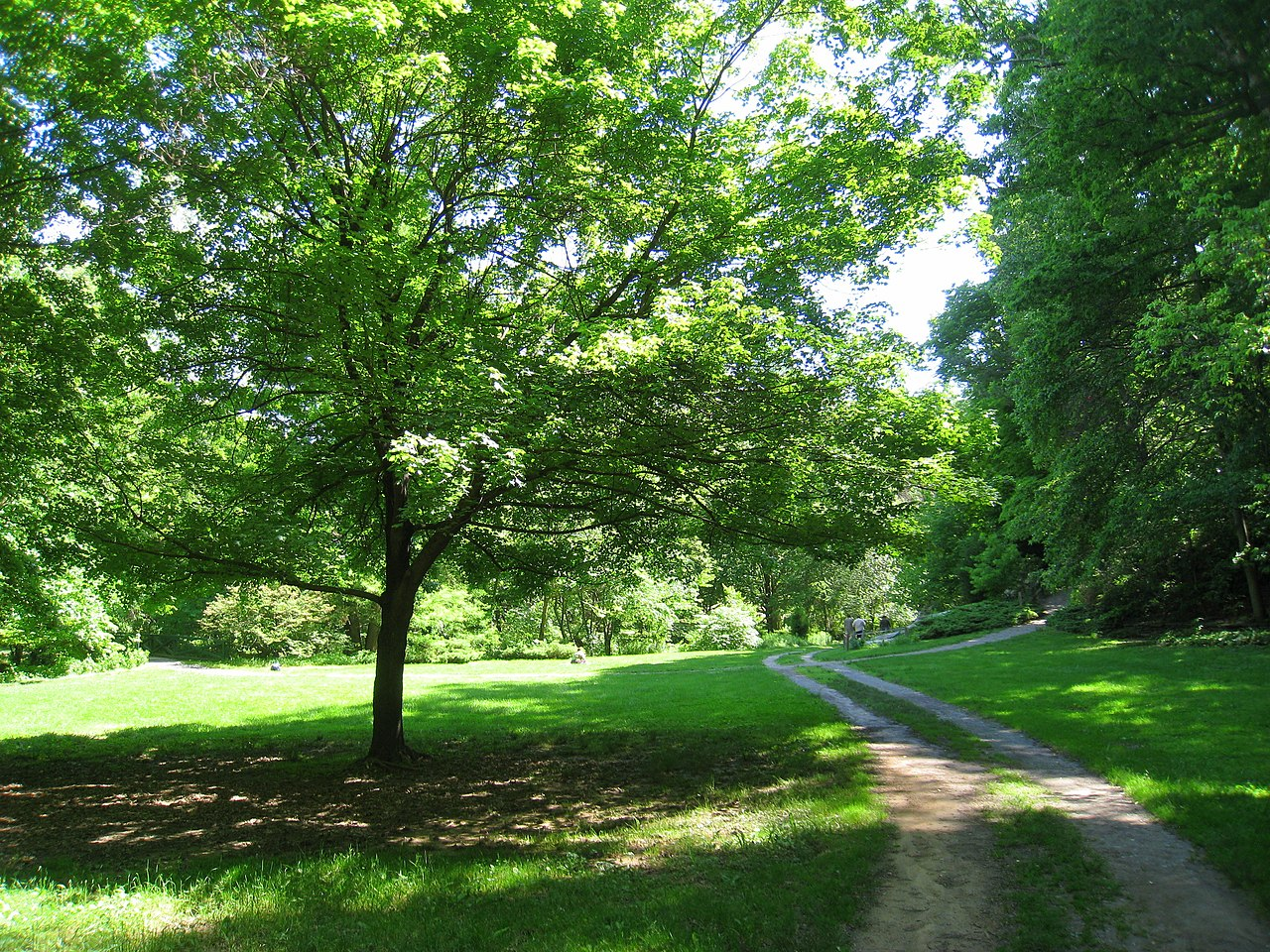 File Botanical Gardens At Asheville Meadow Jpg Wikimedia Commons