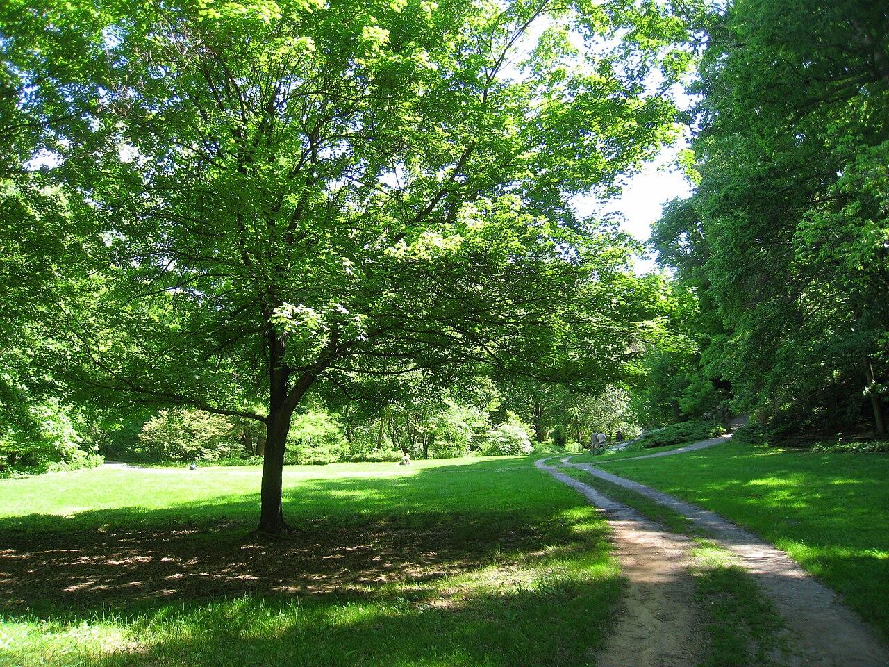File Botanical Gardens At Asheville Meadow Jpg