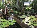 Botanische tuinen Utrecht 39.jpg