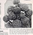 Bountiful Ridge Nurseries - your 1941 guide to better fruits and more beautiful homes (1941) (20380556266).jpg