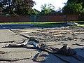 Bourne Road, Pangbourne - geograph.org.uk - 504359.jpg