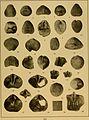 Brachiopod genera of the suborders Orthoidea and Pentameroidea (1932) (20398886292).jpg