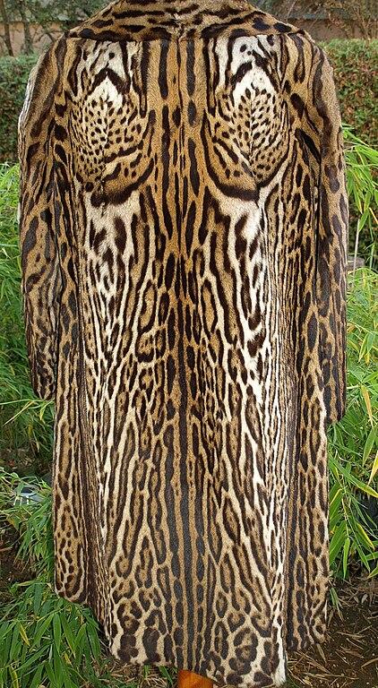 Not Exempelmeningarna kommer i huvudsak från svenska dagstidningar tidskrifter och romaner Arter som lever i tät vegetation gärna klättrar i träd och ofta är aktiva nattetid  exempelvis leopard jaguar ozelot och dvärgtigerkatt  tenderar att vara fläckiga eller marmorerade