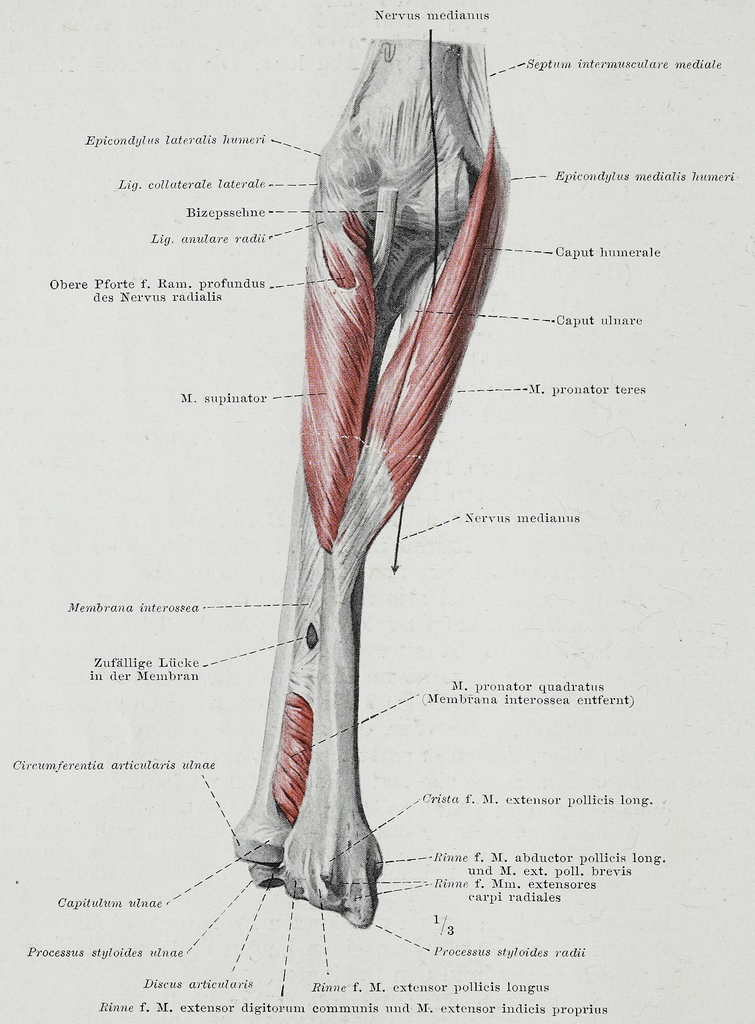 File:Braus 1921 179.png - Wikimedia Commons