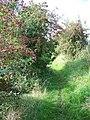 Bridleway, Broad Chalke - geograph.org.uk - 985348.jpg