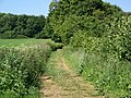 Bridleway near Hinton Ampner - geograph.org.uk - 1327571.jpg