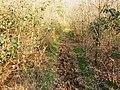 Bridleway to Ravensroost Wood - geograph.org.uk - 1234584.jpg