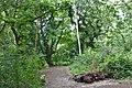 Brotherton Park pathway.jpg