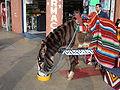 Brown Tijuana Zebra.JPG
