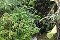 Butterfly Rainforest FMNH 10.jpg