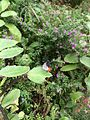 Butterfly park @ bannerghatta.jpg