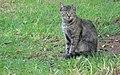 CAT 0011 (2941923849).jpg