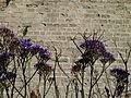 Caesarea Maritima - City Walls P1100152.JPG