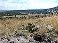 CajaTunas - Santa Fe National Forest (14963346654).jpg