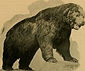 "California game ""marked down""; (1896) (14747317161).jpg"
