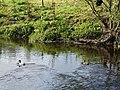 Camowen River, Omagh - geograph.org.uk - 565018.jpg
