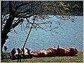 Canoas no Centro Náutico do Parque da Cidade. - panoramio.jpg