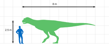 Size comparison of Carnotaurus