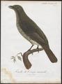 Casmarhynchus niveus - 1801 - Print - Iconographia Zoologica - Special Collections University of Amsterdam - UBA01 IZ16600169.tif