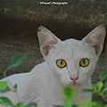 Cat In My Garden.jpg