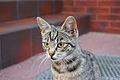 Cat Poland.jpg