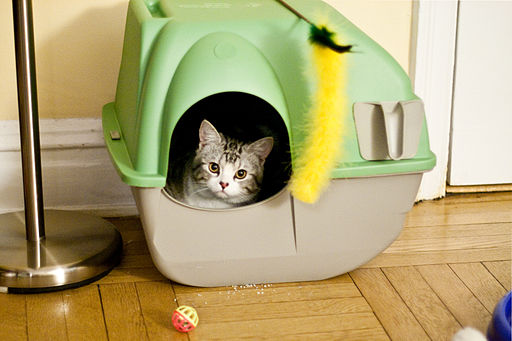 Cat litter house