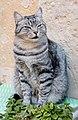 Cat in Ortygia 2017 (cropped).jpg