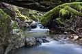 Cataract Creek, Mount Tamalpais State Park (February 2019)-3444.jpg