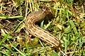 Caterpillar 5 (BG) (13349060274).jpg