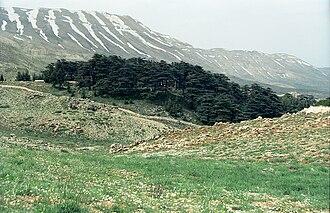 Cedars of God - Image: Cedars 01(js)
