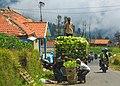 Cemoro-Lawang Indonesia Farmer-01.jpg