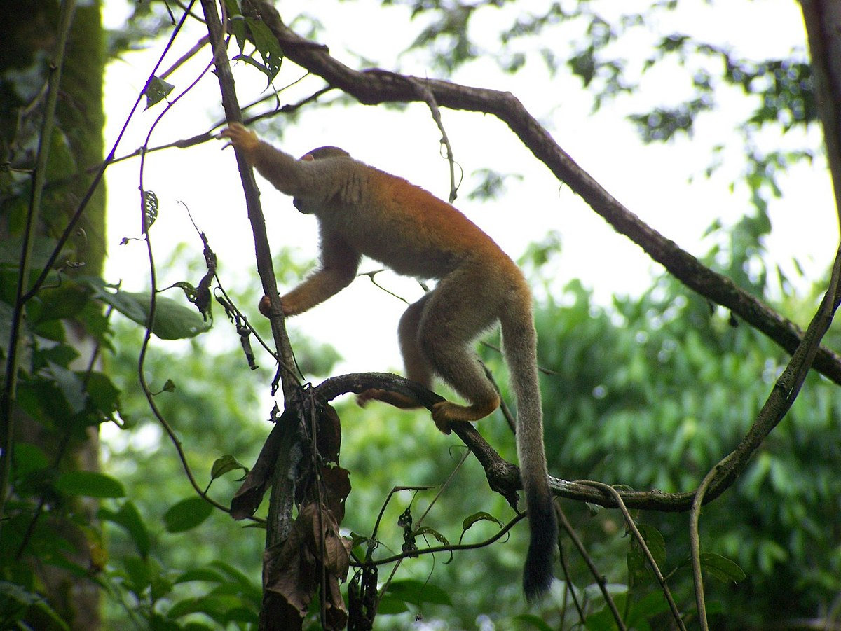 Manuel Antonio National Park Travel Guide At Wikivoyage