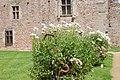 Château de la Roche Jagu-Les jardins-Cour d'Honneur-6082.jpg
