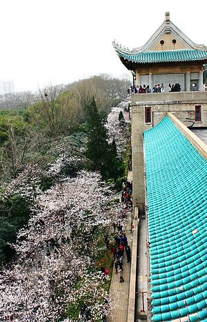 Wuhan University - Cherry Blossom in Wuhan University