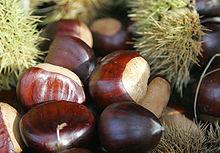 Partie pour La cueillette des Châtaignes dans FLORE FRANCAISE 220px-Chestnut