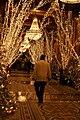 Christmas Lights in the Roosevelt.jpg