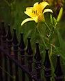 """Cincinnati - Spring Grove Cemetery & Arboretum """"Fenced In"""" (19466186022).jpg"""