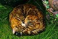 Circle cat is circular.jpeg