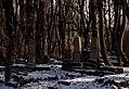 Cmentarz żydowski Przemyśl 01.01.17 7pl.jpg