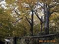 Cmentarz wojenny nr 83 Wapienne.jpg